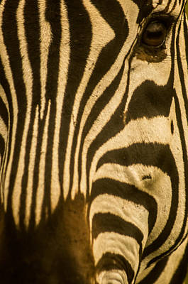 Photograph - Zebra Eye by Jennifer Burley