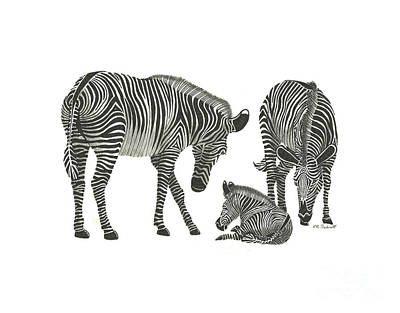 Drawing - Zebra Family by E B Schmidt