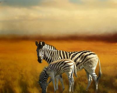 Photograph - Zebra Family by TnBackroadsPhotos