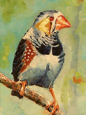 Zebra Finch Art Print