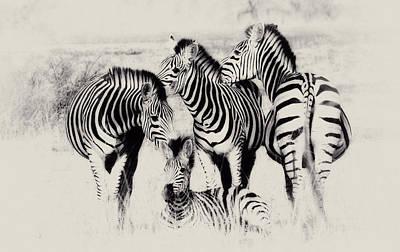 Zebra Foursome Art Print by Christa Niederer