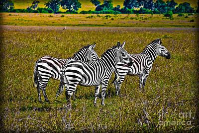 Zebra In Kenya Art Print