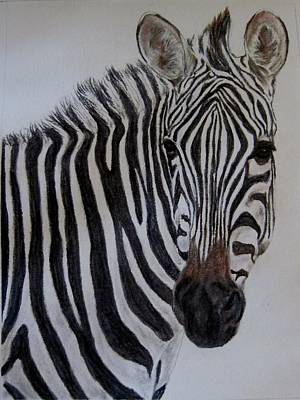 Pastel - Zebra by Joan Pye