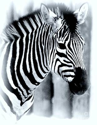 Zebra Art Print by Kathleen Struckle
