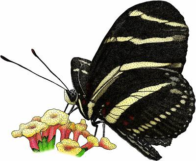 Photograph - Zebra Longwing Butterfly by Roger Hall