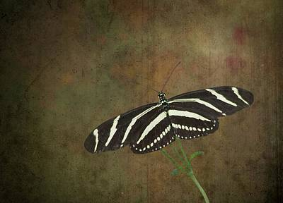 Zebra Longwing  Butterfly-1 Art Print