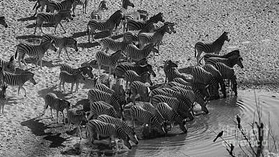 Photograph - Zebra by Mareko Marciniak