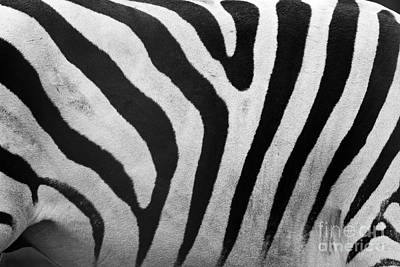 Photograph - Zebra Pattern Close Up by Michal Bednarek