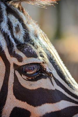 Photograph - Zebra Perspective by Emily Stauring