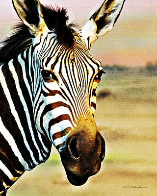 Photograph - Zebra Portrait 1 by Walter Herrit