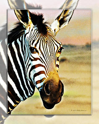 Photograph - Zebra Portrait 2 by Walter Herrit