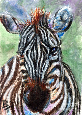 Painting - Zebra Portrait Aceo by Brenda Thour
