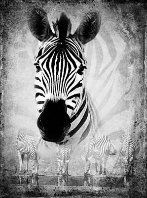 Zebra Profile In Bw Art Print by Ronel Broderick