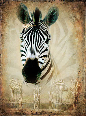 Zebra Profile Art Print by Ronel Broderick