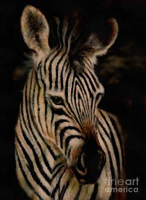Painting - Zebra by Scott B Bennett