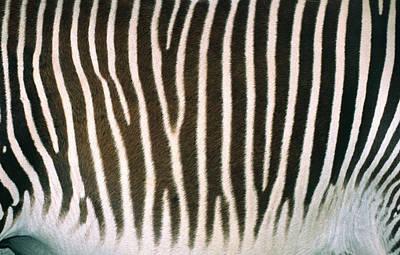 Pattern Photograph - Zebra Skin by Nigel Downer