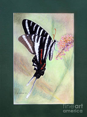 Photograph - Zebra Swallowtail Butterfly By George Wood by Karen Adams