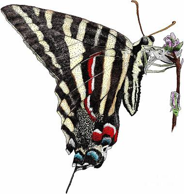 Photograph - Zebra Swallowtail Butterfly by Roger Hall