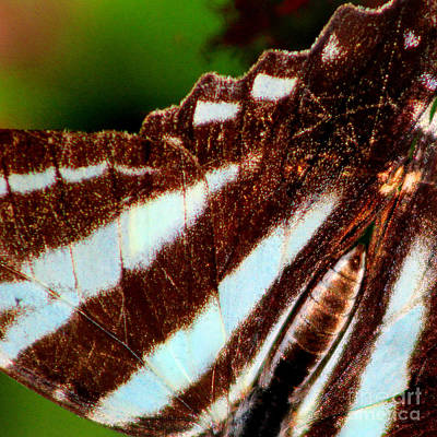 Photograph - Zebra Swallowtail Butterfly Wing Square by Karen Adams