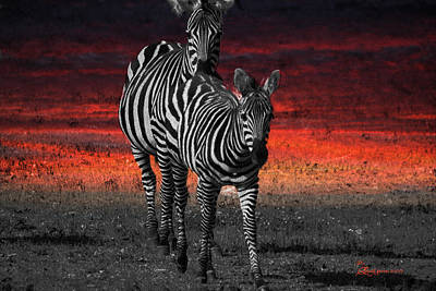 Zebra Train - Featured In Nature Photography - Wildlife And A Place For All Groups Art Print by EricaMaxine  Price