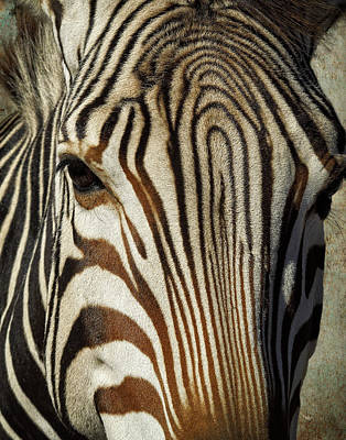 Photograph - Zebra Up Close And Personal by Sandra Selle Rodriguez