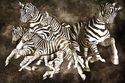 Dimensions Digital Art - Zebras by Betsy Knapp