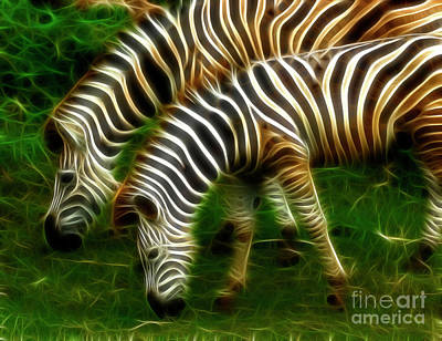 The White Stripes Photograph - Zebras by Bob Christopher