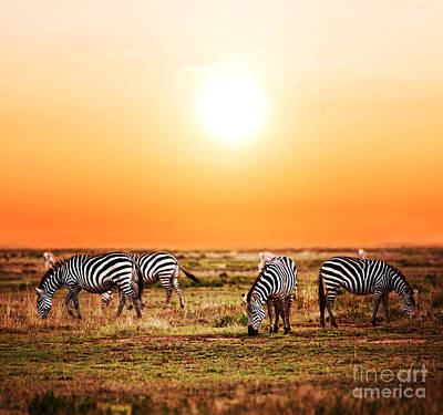 African Photograph - Zebras Herd On African Savanna At Sunset. by Michal Bednarek