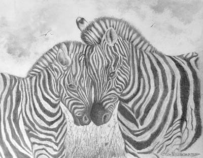 Drawing - Zebras by Jim Hubbard