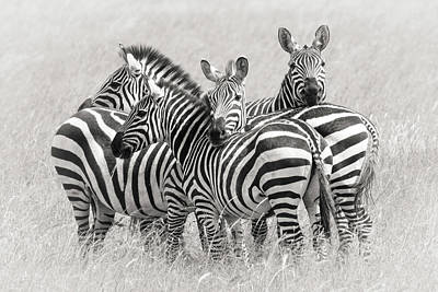 Tights Photograph - Zebras by Kirill Trubitsyn
