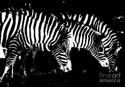 Photograph - Zebras  by Mindy Bench