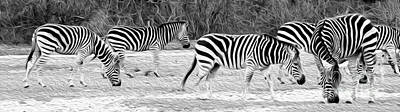 Photograph - Zebras by Rebecca Cozart