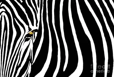 Stripes Photograph - Zebressence by Dan Holm
