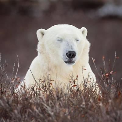 Photograph - Zen Bear by Jack Bell