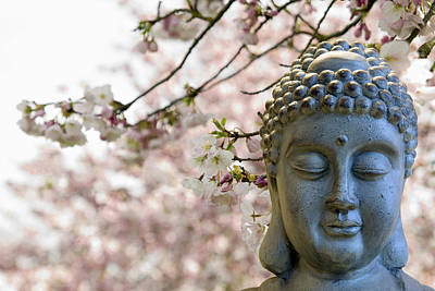 Nature Photograph - Zen Buddha Meditating Under Cherry Blossom Trees by David Gn