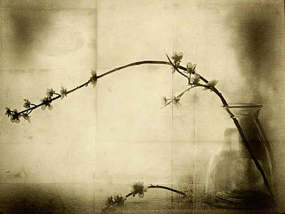 Blossom Photograph - Zen by Jeffrey Hummel