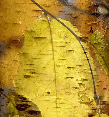 Photograph - Zen Leaf 1 by France Laliberte