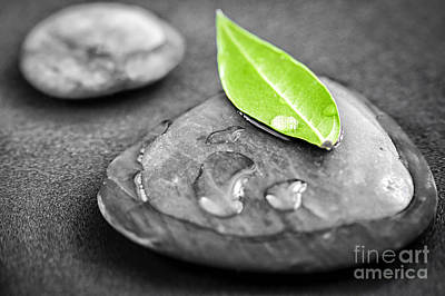Massage Photograph - Zen Stones by Elena Elisseeva