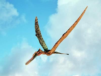 Paleobotany Photograph - Zhenyuanopterus by Walter Myers
