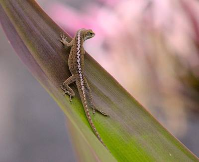 Lizard Photograph - Zigzag  by Kimberly Reeves
