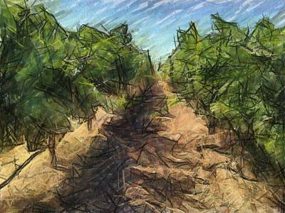Napa Valley Vineyard Digital Art - Zinfandel Rows by Bud Anderson