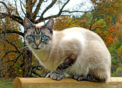 Photograph - Zing The Cat In The Fall by Duane McCullough