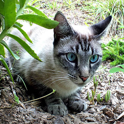 Photograph - Zing The Cat In The Garden by Duane McCullough