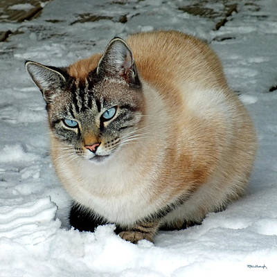 Photograph - Zing The Cat On The Porch In The Snow 2 by Duane McCullough