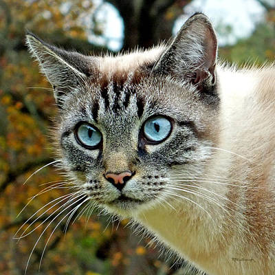 Photograph - Zing The Cat Upclose by Duane McCullough
