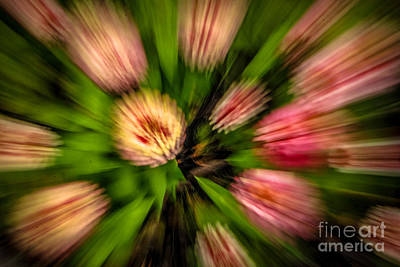 Photograph - Zinia Zooming Burst by Grace Grogan