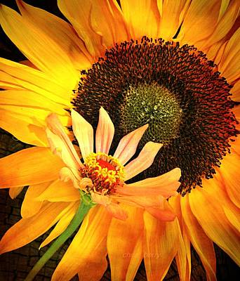 Photograph - Zinnia And Sunflower by Chris Berry