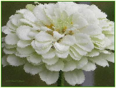 Discount Codes Digital Art - Zinnia  Floral Art by Sonali Gangane