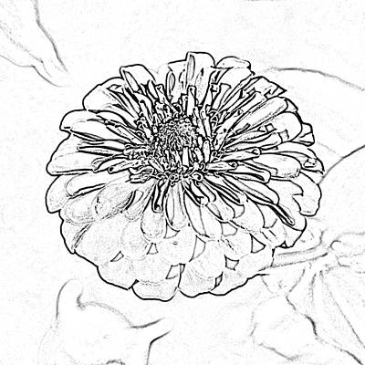 Digital Art - Zinnia Flower Floral Decor Macro Closeup Square Format Black And White Sketch Digital Art by Shawn O'Brien