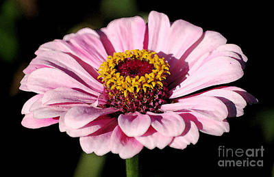 Digital Art - Zinnia Pink Flower Floral Decor Macro Watercolor Digital Art by Shawn O'Brien